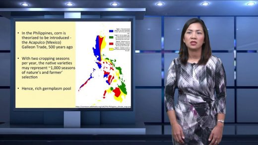 Strengthening Philippine Corn Germplasm through Grain Quality Enhancement | Dr. Tonette P. Laude