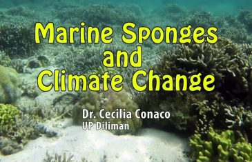 UP TALKS | Marine Sponges and Climate Change