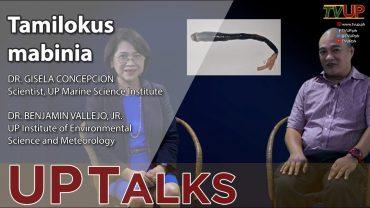 UP TALKS | Tamilokus mabinia